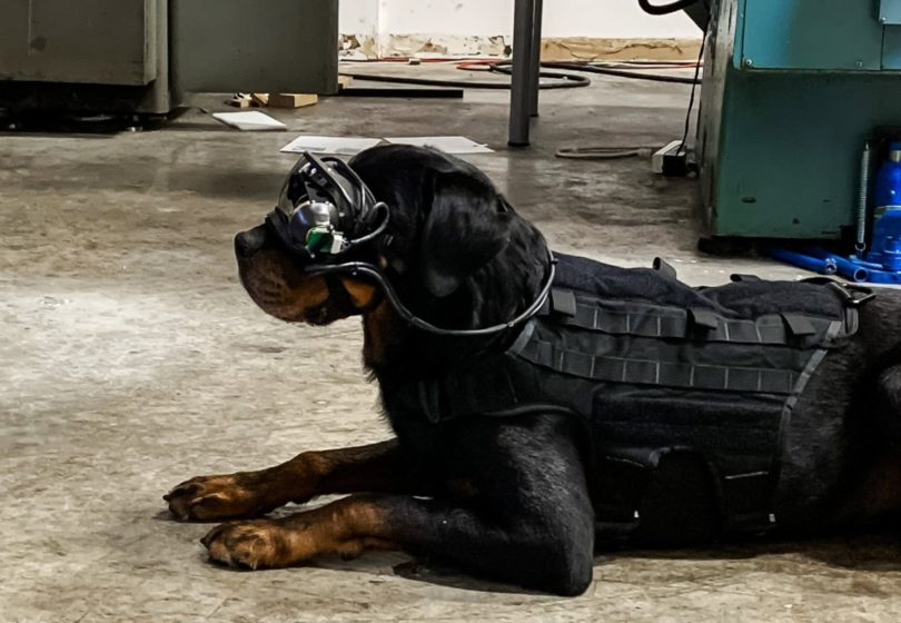 美国军队正在试验用于军犬的AR护目镜