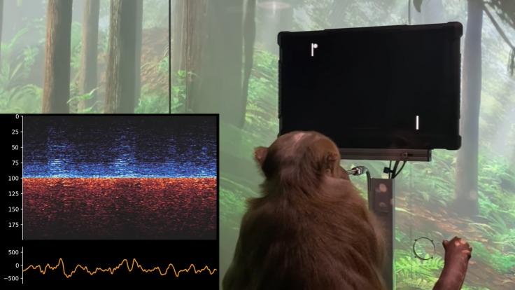 猴子用意念玩乒乓游戏!马斯克脑机接口技术再出新功能