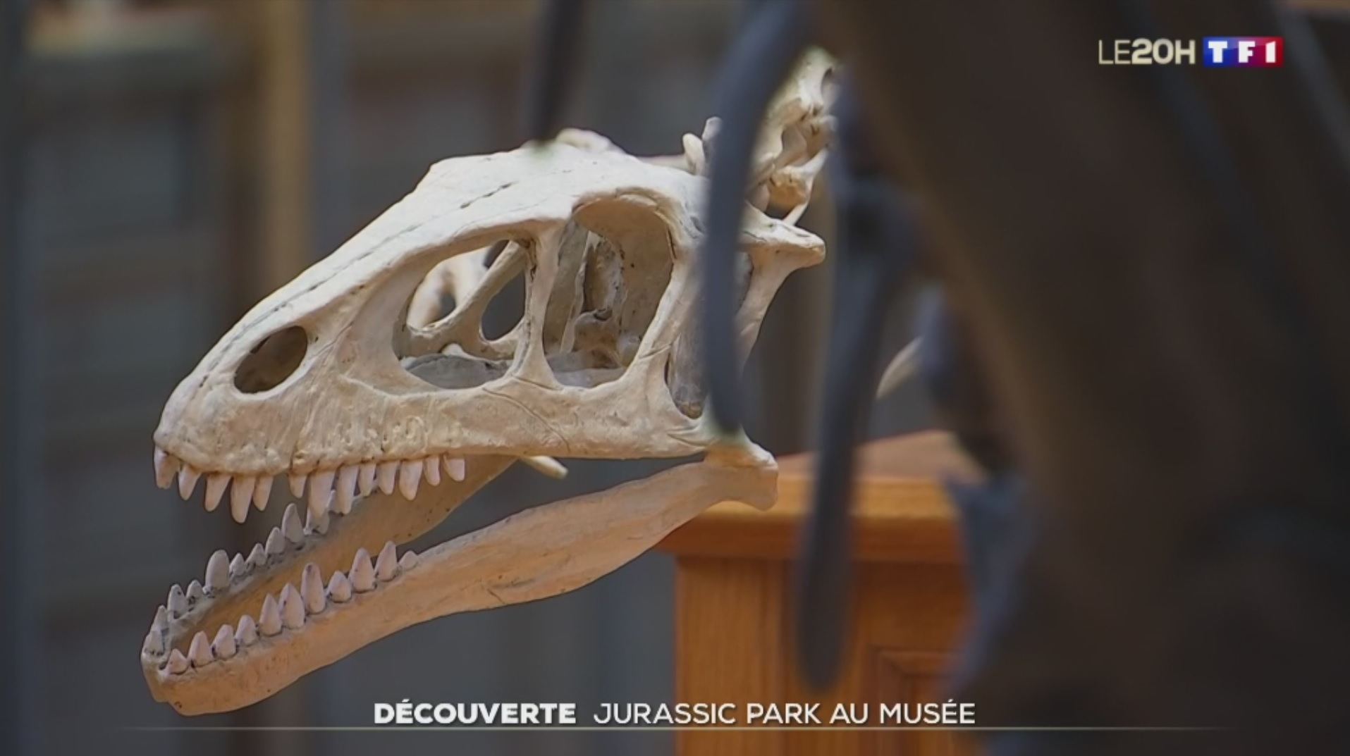 """巴黎博物馆利用HoloLens 2""""复活""""已灭绝物种"""